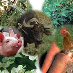 herbal medicines for animals