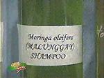 malunggay shampoo